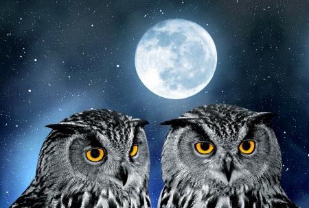 Eagle Owl, Bubo bubo  photo