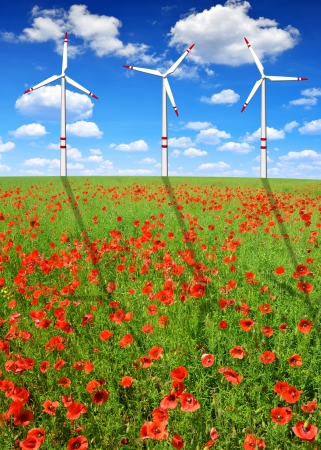 red poppy field with wind turbines  photo