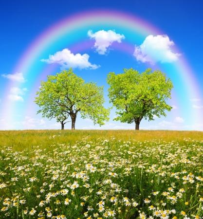 gebied van margrieten met bomen en regenboog