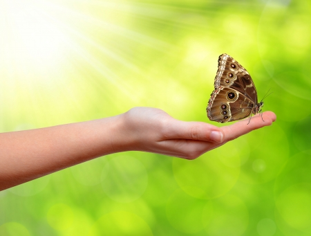 butterfly hand: Butterfly Morpho sitting on the hand  Stock Photo