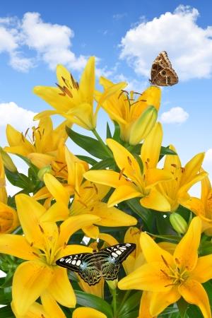 mariposas amarillas: Lily con mariposas