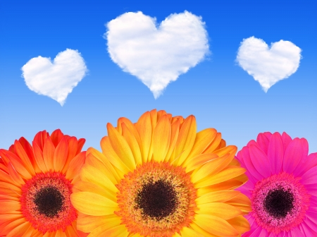 gerberas flowers with hearts from clouds