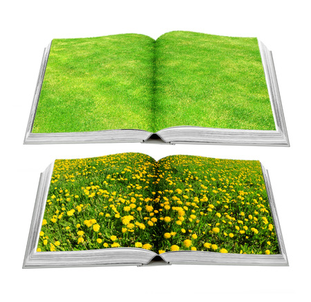 Grass and dandelion on book photo