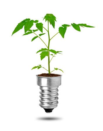 welfare plant: plants growing from bulbs