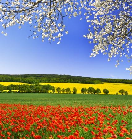 lente landschap met rode papaver veld