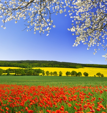 horizons: spring landscape with red poppy field