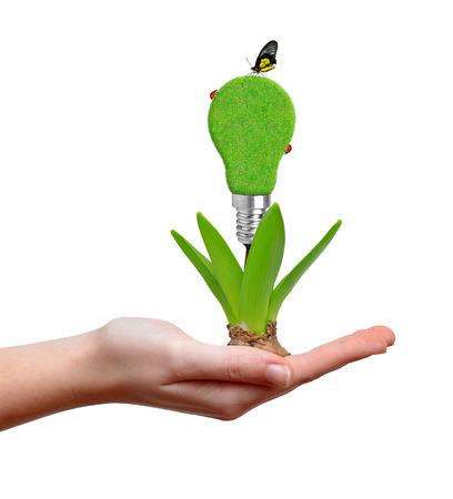 welfare plant: Hand holding green bulb on plant Stock Photo