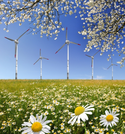 field of marguerites with wind turbines photo