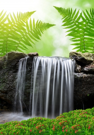 torrent: Beautiful waterfall  Stock Photo