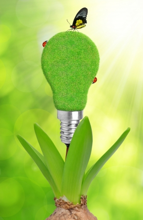 photosynthesis: green bulb on plant Stock Photo
