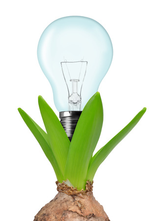 photosynthesis: Light bulb on plant isolated on white - green energy concept