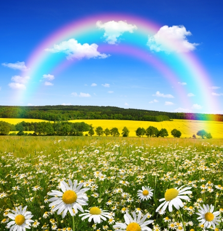 marguerites: field of marguerites with rainbow Stock Photo