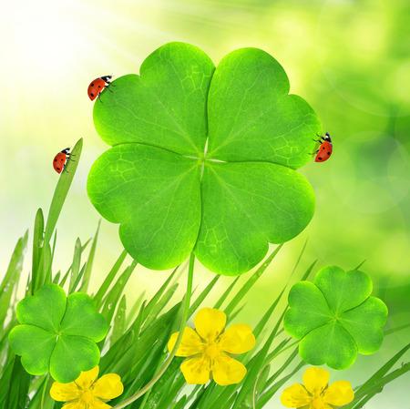 shamrock: Green clover leaf with ladybugs