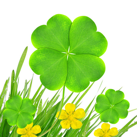 Fresh dewy green grass with clover leaf isolated on white background  photo