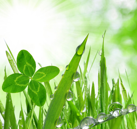 quarterfoil: Fresh grass with dew drops close up Stock Photo