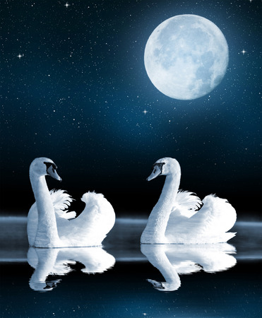 Swans on the lake in the night sky