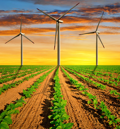 green sunflowers with wind turbines in the sunset  photo