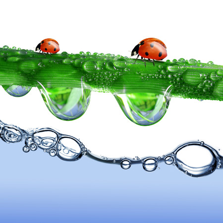 water level: Fresh grass with dew drops and ladybugs above the water level