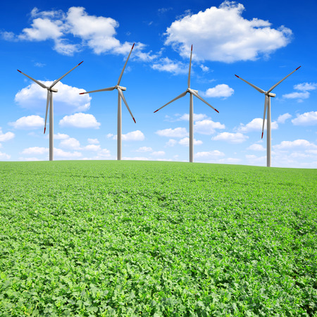 Field with green canola with wind turbines photo