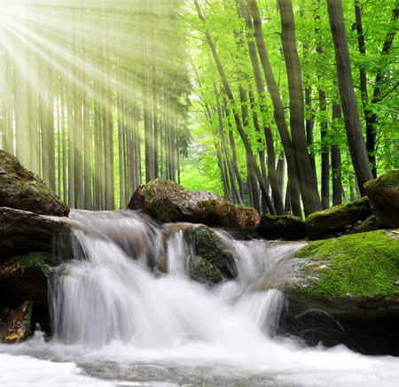 Cascade dans la forêt au printemps Banque d'images - 26036887