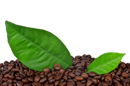 coffee grains and leaves photo
