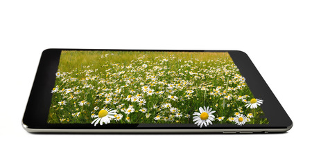 tablet with field of marguerites on it isolated on white photo