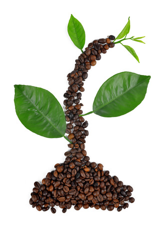 Plant from coffee grains and leaves photo