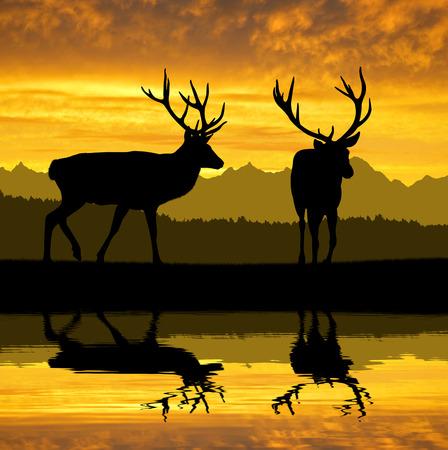 Herten silhouetten in de zonsondergang Stockfoto