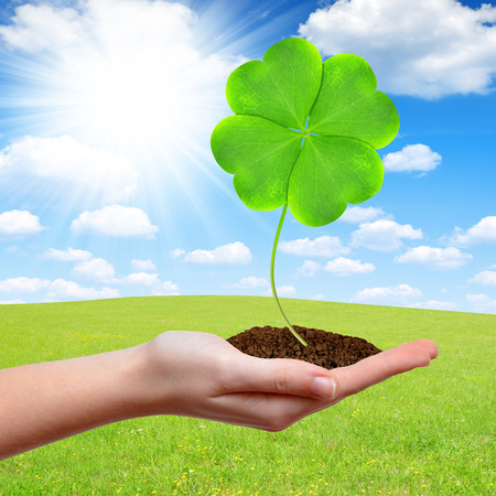 Green clover leaf in hand photo