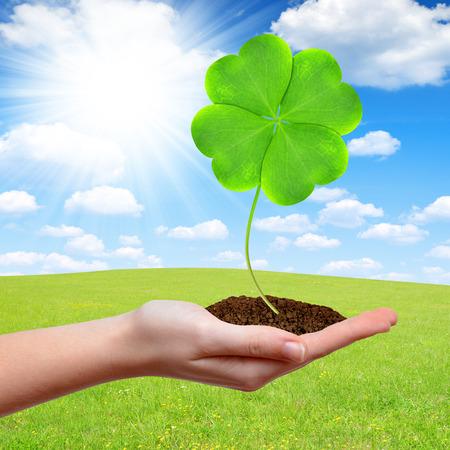 trefoil: Green clover leaf in hand