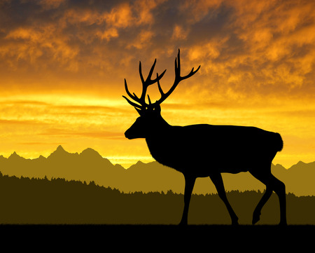 theme parks: Deer silhouettes in the sunset Stock Photo