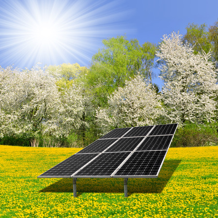 silicium: Solar energy panels on dandelion field Stock Photo