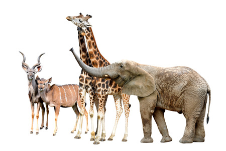 youngly: Giraffes, Kudu and Elephant
