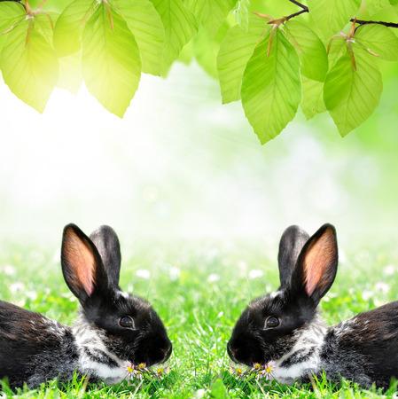bunnie: Cute Rabbits in Grass