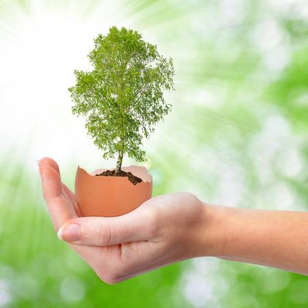 granja avicola: Mano que sostiene el árbol que crece fuera del huevo