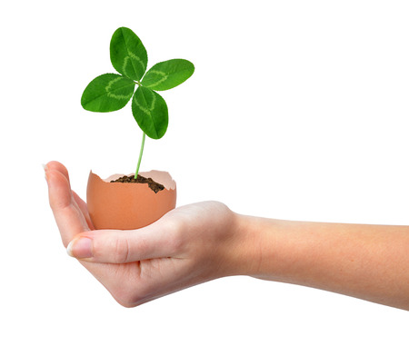 Hand holding clover growing out of the egg isolated on white New life concept