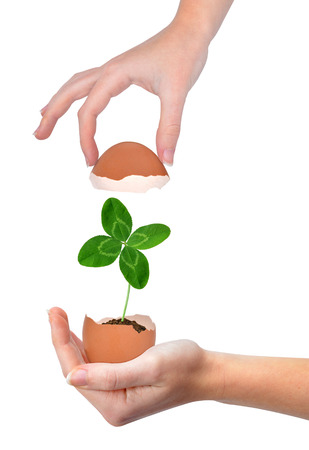 quarterfoil: Hand holding clover growing out of the egg isolated on white New life concept