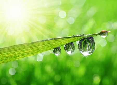 wet leaf: Fresh grass with dew drops close up Stock Photo