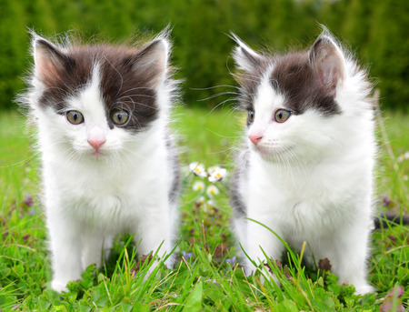 Small kittens in the grass Stock Photo