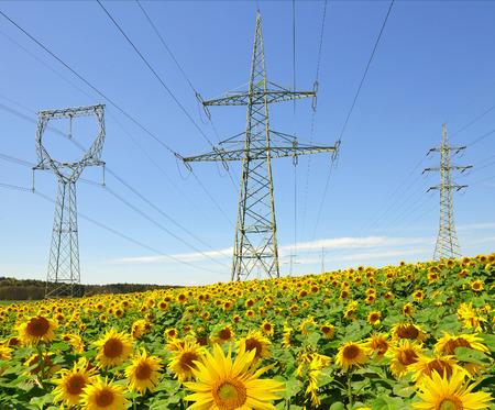torres de alta tension: Pilón de la electricidad en campo del girasol Foto de archivo