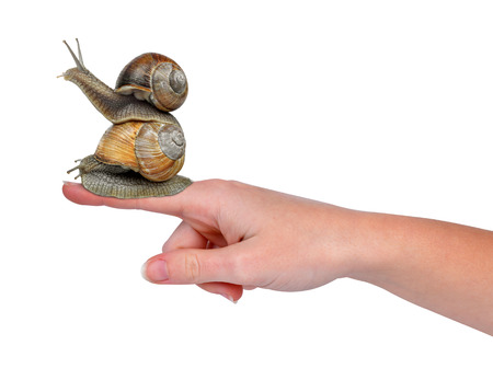 hermaphrodite: Garden snails on hand isolated  Stock Photo