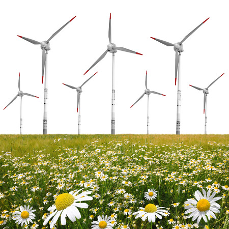 marguerites: field of marguerites with wind turbines on white background
