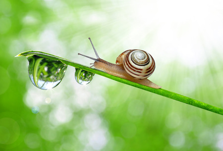 snail: Snail on dewy grass Stock Photo