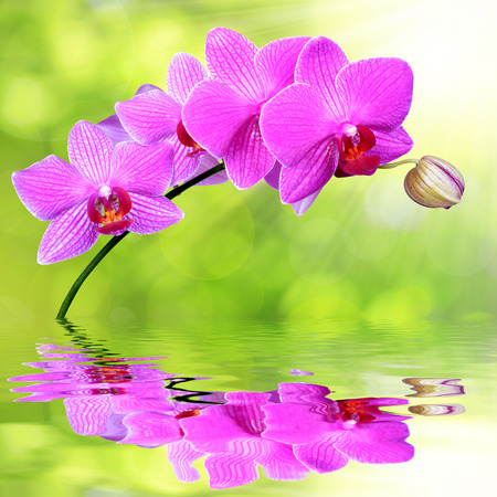 carpel: purple orchid on green background  Stock Photo
