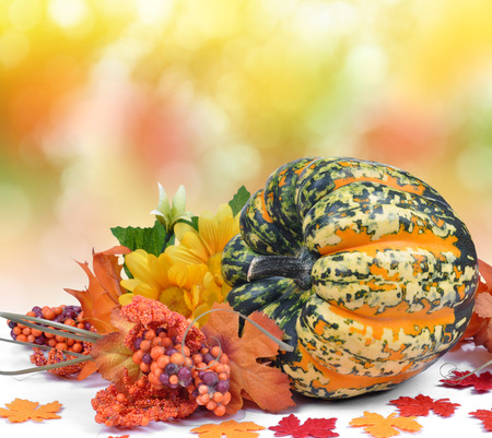 ash gourd: Colorful pumpkin on autumnal background
