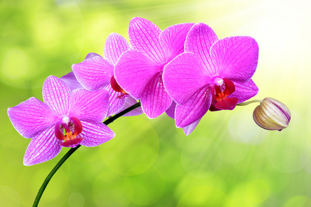 carpel: purple orchid on green background