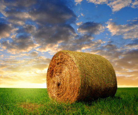 bale: straw bale in the sunset