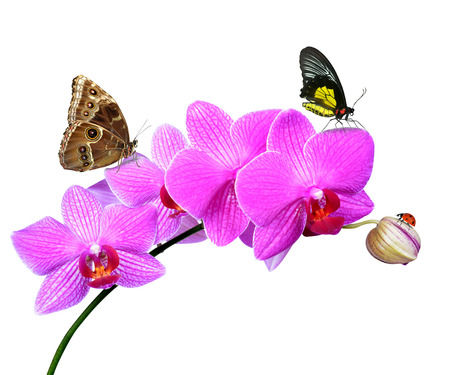 Closeup of a purple orchid with butterflies and ladybug isolated on white photo