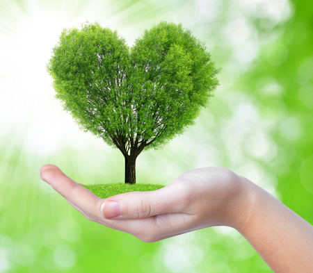 growing tree in the shape heart in hand on green background photo