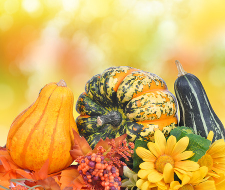 ash gourd: Colorful pumpkins on autumnal background